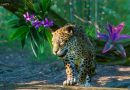 Planet Zoo: South America Pack – Review